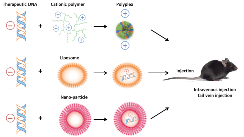 Landscape Of In Vitro Cell Transfection And In Vivo Transfection Sirna Transfection Dna Plasmid Transfection Nanoparticle Transfecton Electroporation Transfection Protocol And So On Genemedi Physical methods like microinjection or electroporation simply punch through the membrane and introduce dna directly into the cytoplasm. landscape of in vitro cell transfection